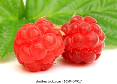 wild raspberries picked in forest