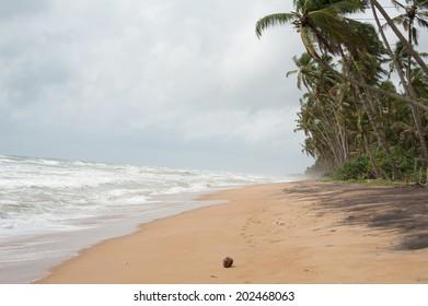 Wild raw empty beach in Sri Lanka