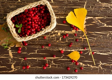 Wild red cowberry and ginkgo leaf