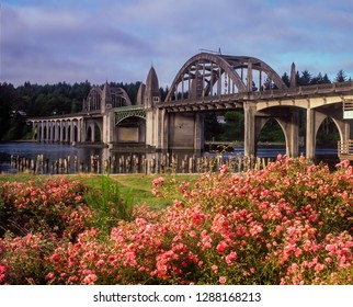 Wild red roses and the siuslaw river bridge on the Oregon coast at Florence.