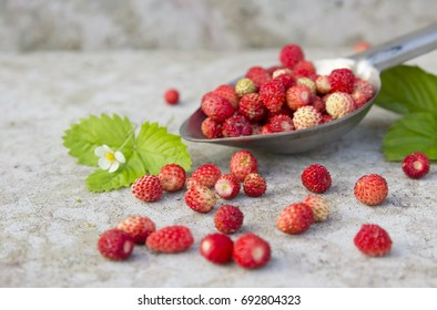 wild red strawberry with green leaf and white flower in the spoon