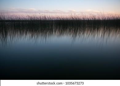 Wild rice reflection in Lake Minnewaka at sunset