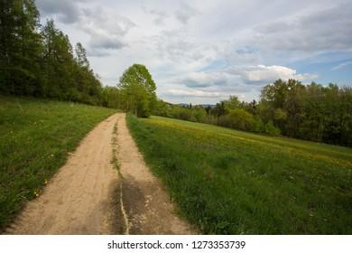 Wild road between meadows