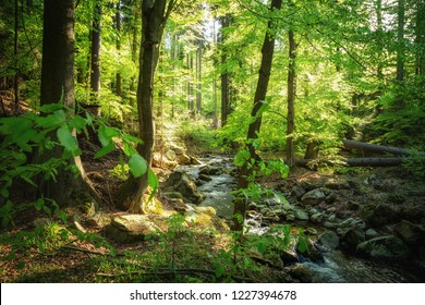 Wild and romantic forest impression with sunshine