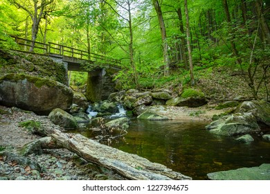 Wild romantic stream  crosses a bridge