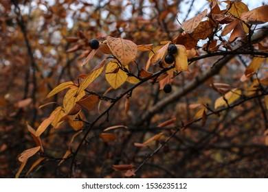 wild rose chokeberry mountain ash autumn forest