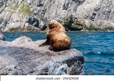 Wild sea lion male rests on a rock in the bay of Pacific ocean