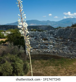 Wild sea squill flowers bloom on ruins of Theatre in Letoon Ancient City in village Kumluova. Short focus, blurred background. Nature of Turkey