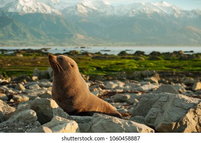 it's wild seal in Kaikoura New zealand. I took this guy as soon as I got up in the morning after camping. In the morning when the trip begins, it is a nice friend I met in nature.