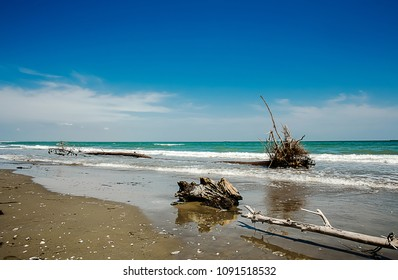 wild seascape with wooden skeleton on the shore