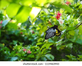 wild small black yellow pattern butterfly  on little tiny flowers, tropical plants outdoor authentic shot in garden selective focus with colorful bokeh background