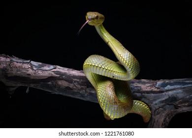 The Wild Snake on Tree
