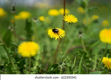 Wild spring flowers on a sunny day with a bumblebee on top