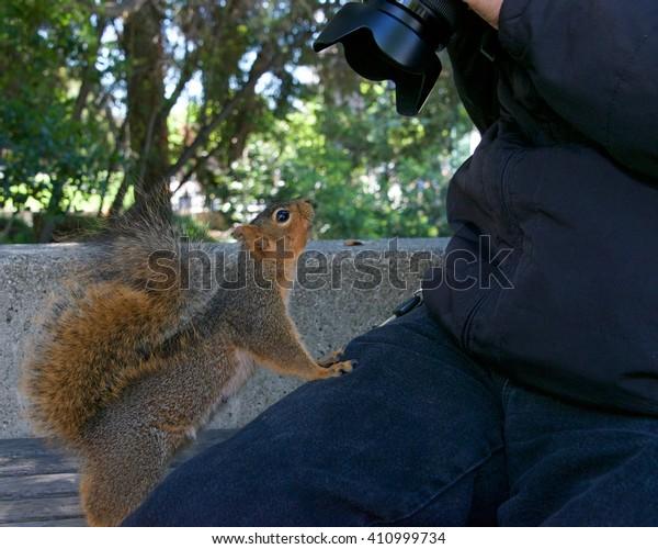 wild-squirrel-local-neighborhood-fed-600