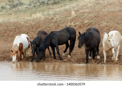Wild Stallion Derby and his band