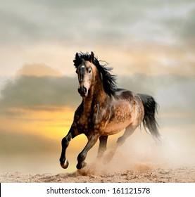 wild stallion in dust