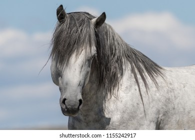 Wild Stallion Head Shot