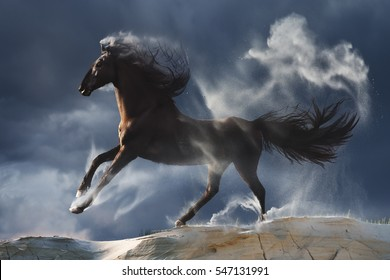 Wild stallion in motion with dust against stormy environment