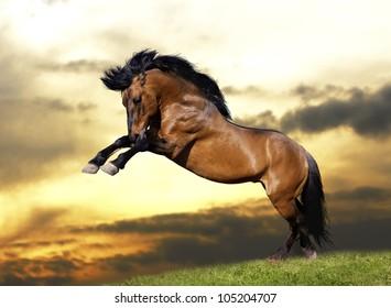 wild stallion plays