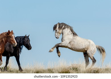 Wild Stallion San Jose