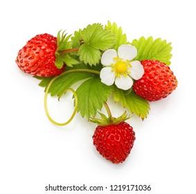 Wild strawberry isolated on white background