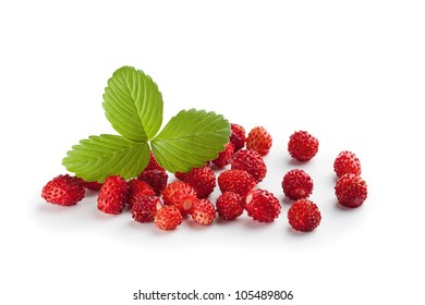 Wild strawberry plant with green leaves