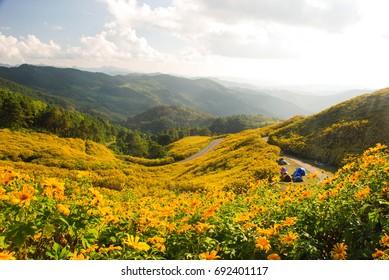 Wild sunflower field in the North of Thailand