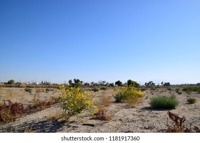 Wild sunflowers adorn the dry landscape of Kern River, Bakersfield, CA.