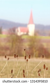 wild teasel in front of a village church, selective focus