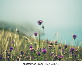 Wild thistles in the fog on a cliffside