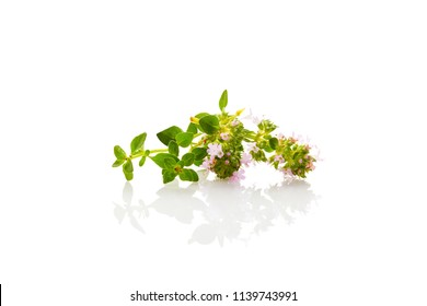 Wild thyme flowers with leaves isolated on white background.