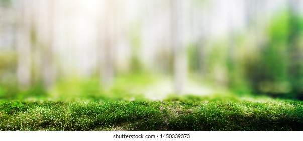 Wild trees in forest. Summer green landscape