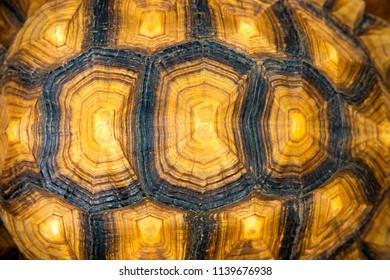 Wild Turtle shell texture.