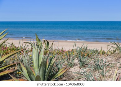 Wild vegetation and Mediterranean out of focus in the background in Denia, Valencia, Spain