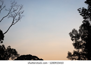 Wild Wallace's hawk-eagle (Nisaetus nanus) (earlier under the genus Spizaetus) in Sepilok, Borneo perched on tree branch high up in rainforest canopy at sunset