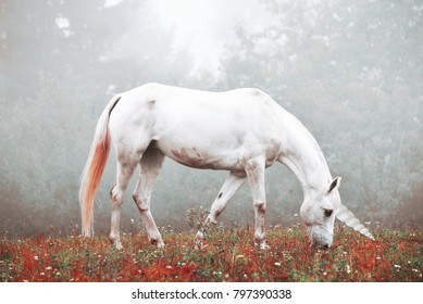 Wild white Unicorn  horse outside in magical forest background scene