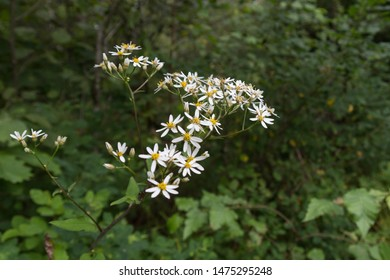 Wild wildflowers or forest flowers similar to daisies
