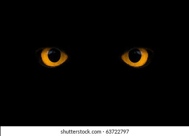 wild yellow eyes isolated on black
