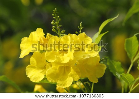 Wild Yellow Flowers Stock Photo Edit Now 1077130805 Shutterstock