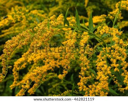 Wild Yellow Flowers Closeup Stock Photo Edit Now 462821119