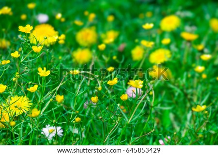 Wild yellow flowers dandelion meadow nature stock photo edit now wild yellow flowers of dandelion in a meadow nature summertime mightylinksfo