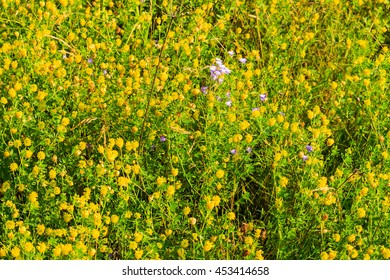 Wild Yellow Flowers And Green Leaves Background Ez Canvas