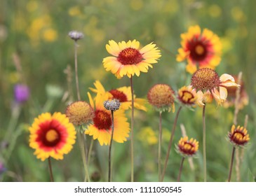 Wild yellow flowers in summer time