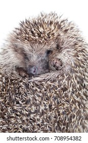 the wild young hedgehog curled into a ball. view from above
