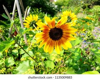 Wilde Blume Images Stock Photos Vectors Shutterstock