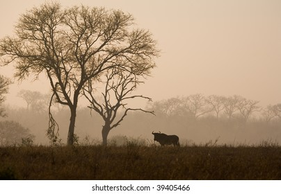 Wildebeest in the dawn mists in South Africa