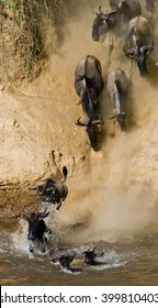 Wildebeest jumping into Mara River. Great Migration. Kenya. Tanzania. Masai Mara National Park. An excellent illustration.