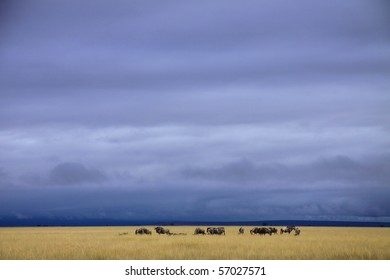 Wildebeest in open African savanna