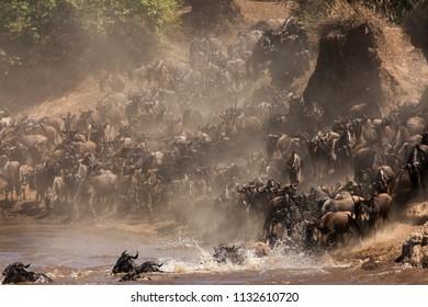 Wildebeests great migration, Masai Mara