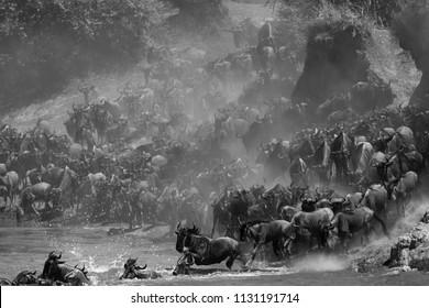 Wildebeests Mara river crossing